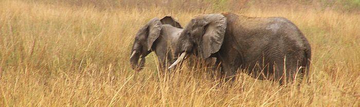 Pendjari Game Reserve, Benin
