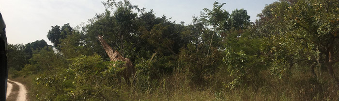 Fathala Game Reserve Senegal